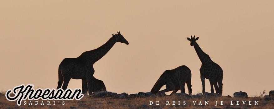 Khoesaan Safari